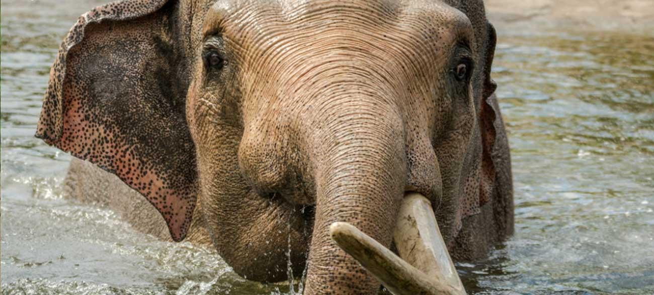 Elefant Münster